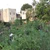 Southwark/Queen Village Community Garden. Image provided by Historical Society of Pennsylvania