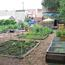 El Colobo Community Garden. Image provided by Historical Society of Pennsylvania
