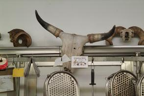 Skull and horn display at D'Angelo Brothers. Image provided by Historical Society of Pennsylvania