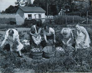 Italian Mothers Club tomato canning day. Image provided by Historical Society of Pennsylvania
