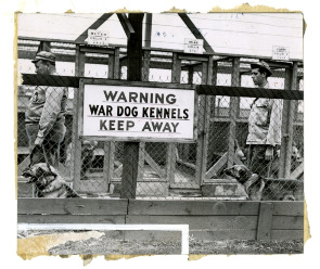 War Dog Kennels on Hog Island. Image provided by Historical Society of Pennsylvania