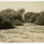 Brush Cut for Survey Line on Hog Island. Image provided by Historical Society of Pennsylvania
