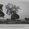 [Penn Treaty Elm Tree]. Image provided by Historical Society of Pennsylvania