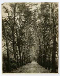 Morris Arboretum 1