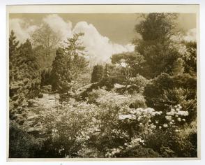 Morris Arboretum 2