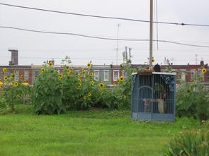 Bird cage at North Mascher Street Casita. Image provided by Historical Society of Pennsylvania